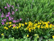 26th Jun 2021 - Nature's Colours