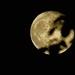 Super Moon June 25, 2021 by olivetreeann