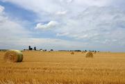 26th Jun 2021 - Southern Illinois Farmland