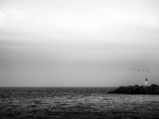 27th Jun 2021 - lighthouse and birds...