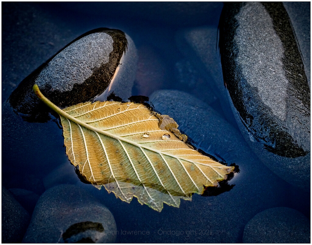The Yellow Leaf by aikiuser