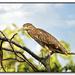 Juvenile Green Heron by lynne5477