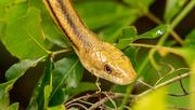 27th Jun 2021 - Eeeeeekkkk!!!  Snake!