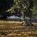 Dappled leaves