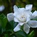 Sweet blossom... by marlboromaam