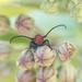 Hello little beetle by fayefaye