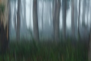 23rd Jun 2021 - the wood
