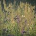A wild meadow by haskar