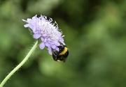 29th Jun 2021 - Sleepy Bee