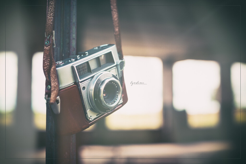 On National Camera Day by lyndemc