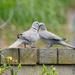 Love Birds by redy4et