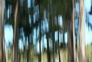 27th Jun 2021 - timber