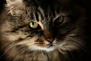 28th Jun 2021 - emma puss