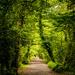 Into The Wildwood by swillinbillyflynn