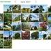 My June tree calendar by mittens