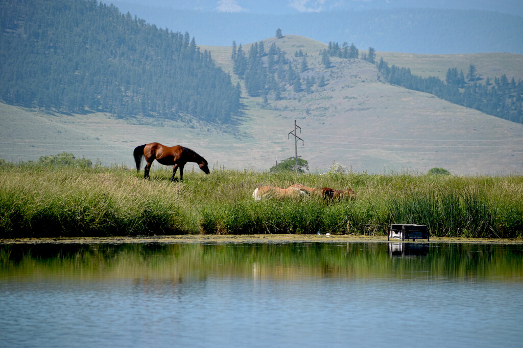 Classic Western Montana View by bjywamer