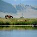 Classic Western Montana View