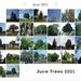 June Trees