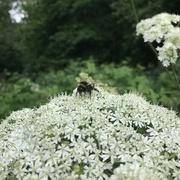 30th Jun 2021 - busy bee