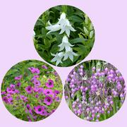 1st Jul 2021 - Herbaceous Perennials