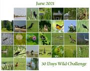 1st Jul 2021 - 30 Days Wild - Month of June Challenge