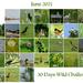30 Days Wild - Month of June Challenge