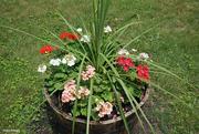 1st Jul 2021 - The flower barrel