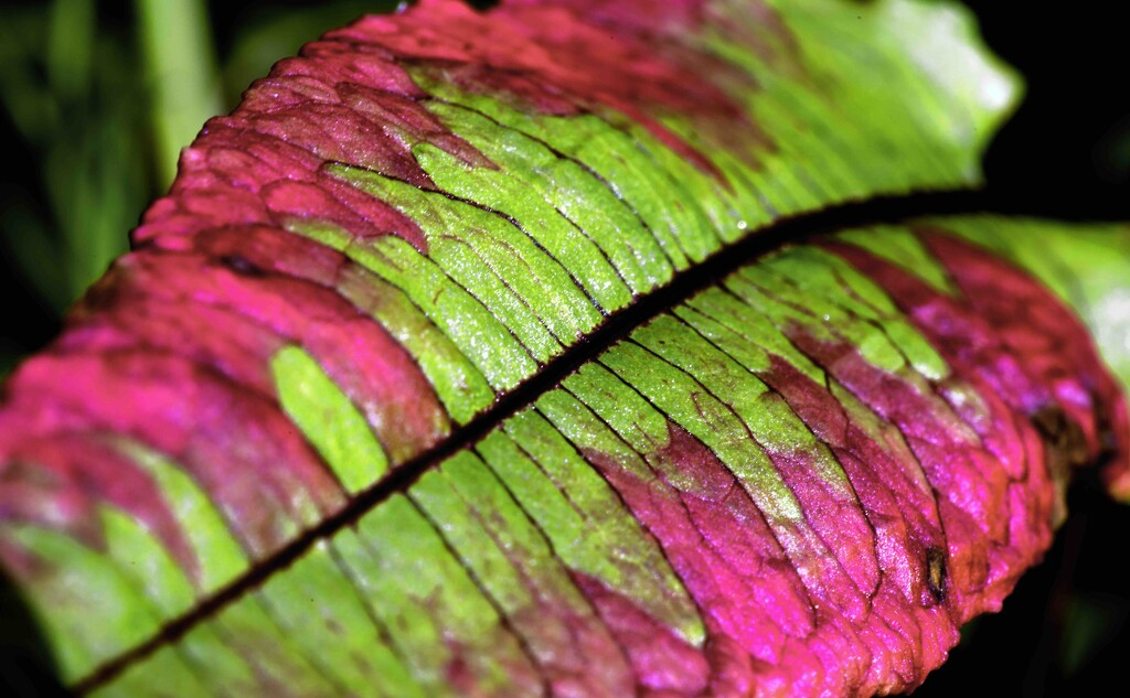 Sorrel leaf by moonbi