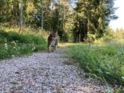 3rd Jul 2021 - On a stroll