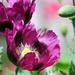 Flower Power by seattlite