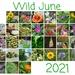 Wild June 2021