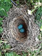 3rd Jul 2021 - Robins nest