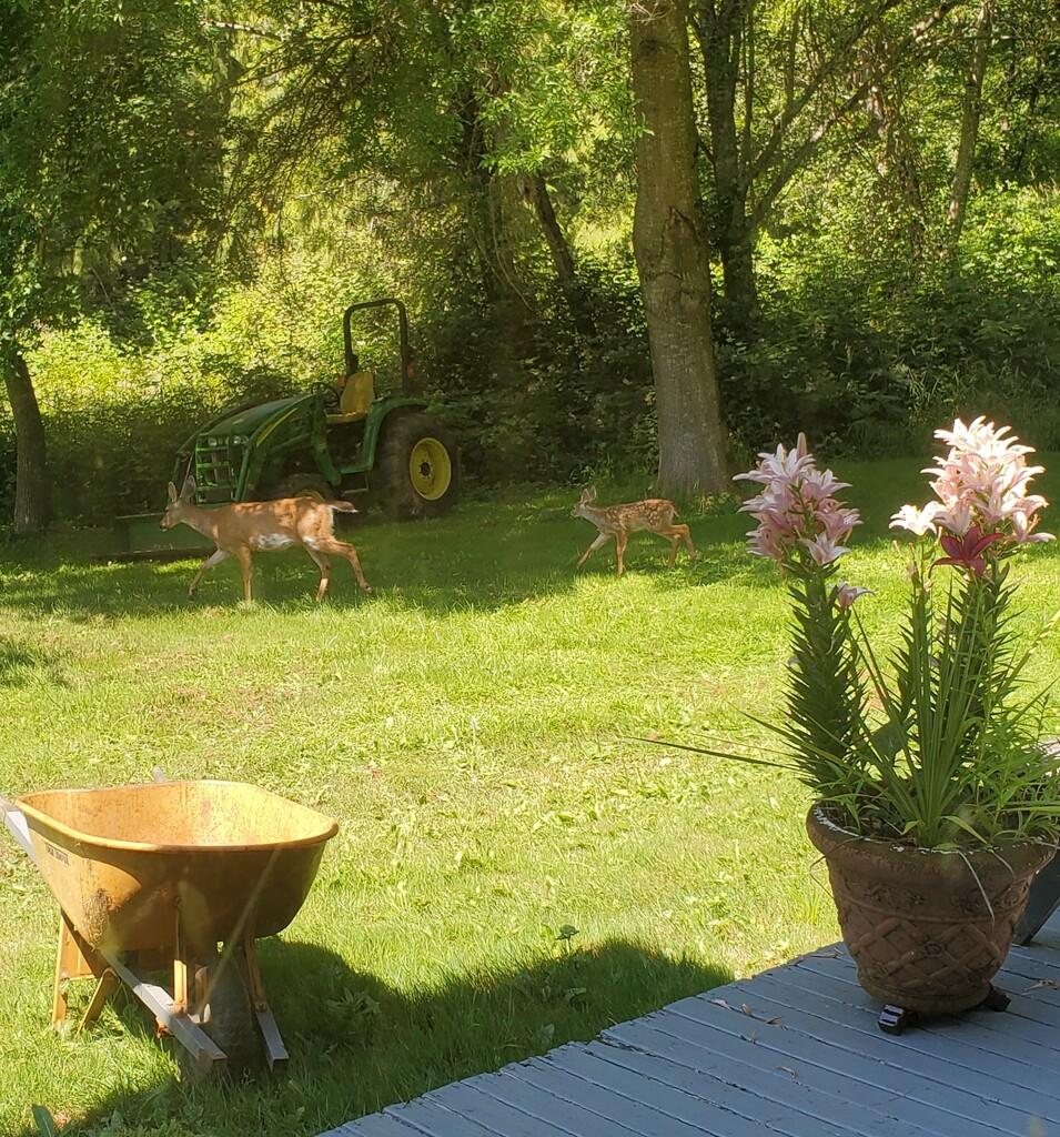 3 deer by shesnaps