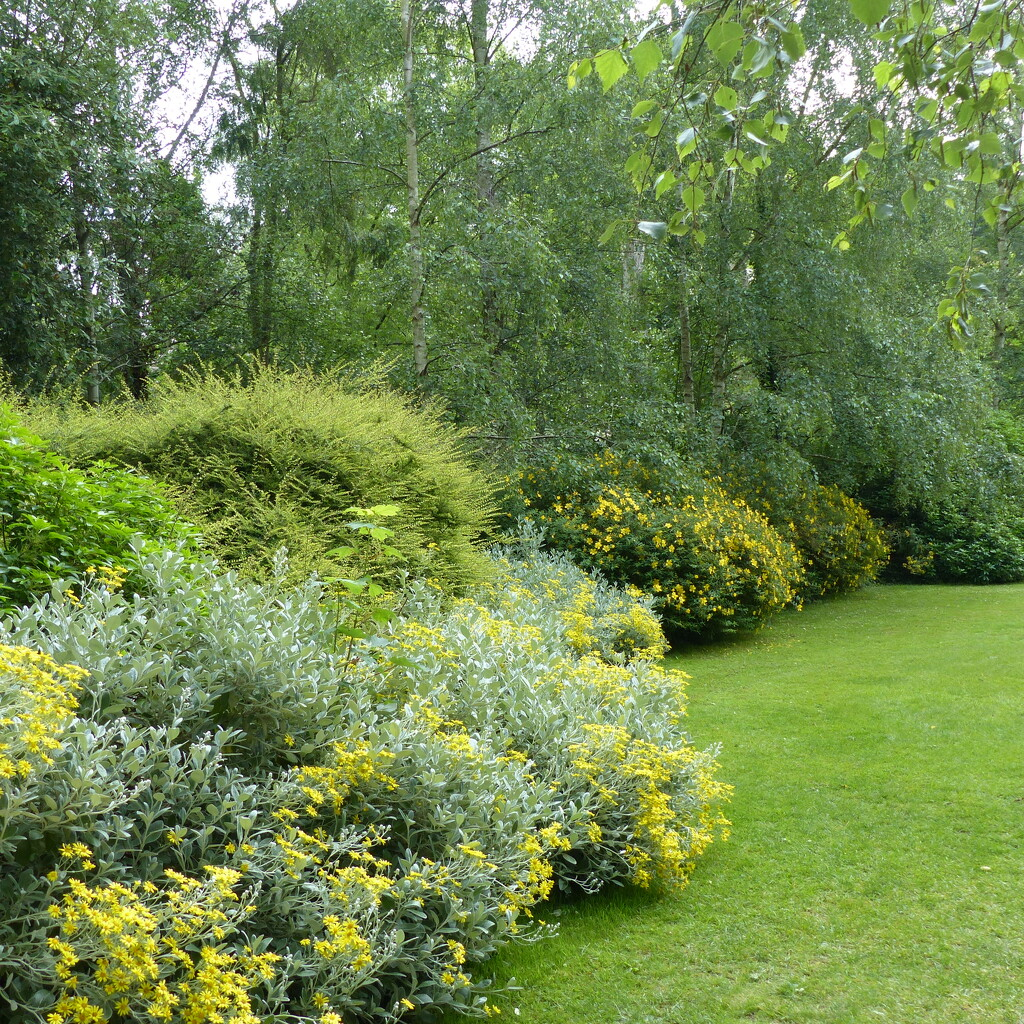 Border with Hypericum  by foxes37