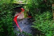 4th Jul 2021 - River Snake