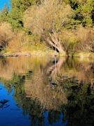 29th Jun 2021 - Tree reflections