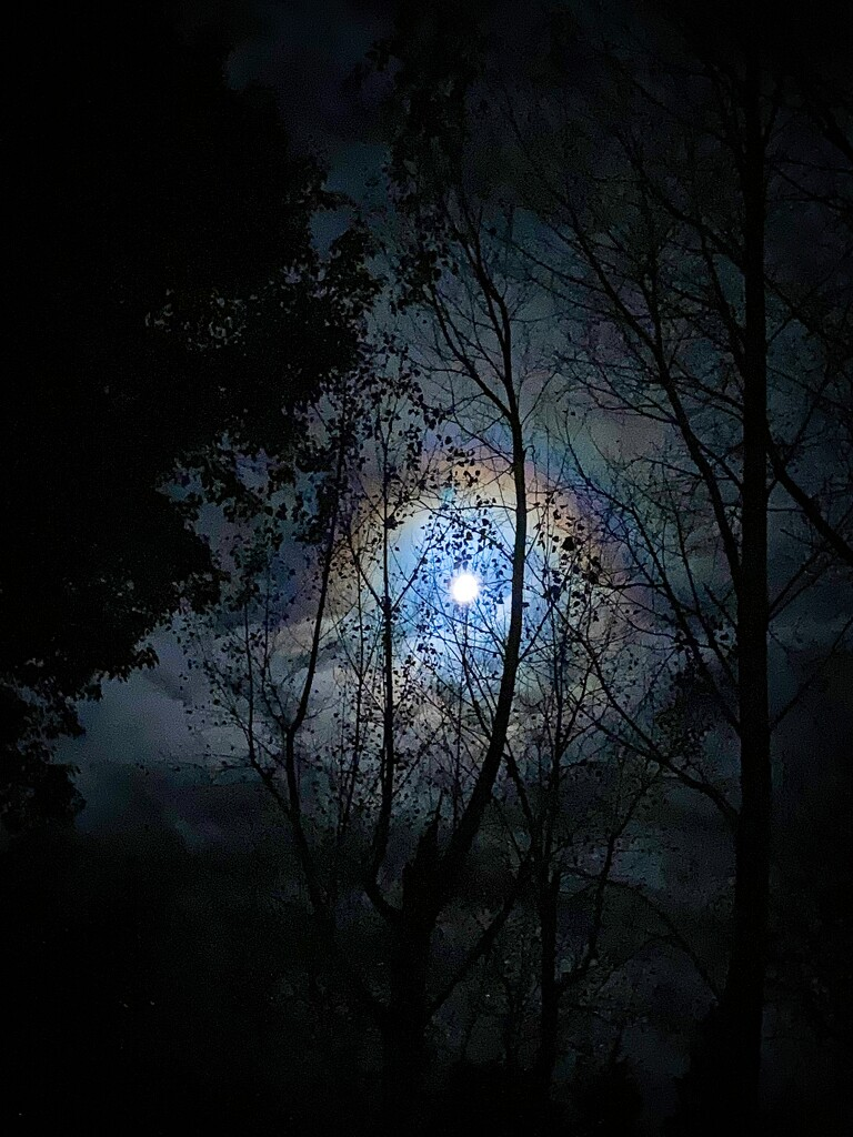 Trees in the moonlight by kiwinanna