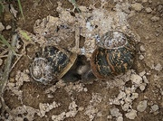 16th Jun 2021 - Making baby snails