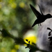 Silhouette Hummer by cwbill