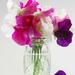 Save a Vase by 30pics4jackiesdiamond