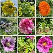 4th Jul 2021 - Some flowers in Erasmus Darwin's garden