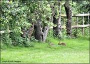 7th Jul 2021 - The bunnies
