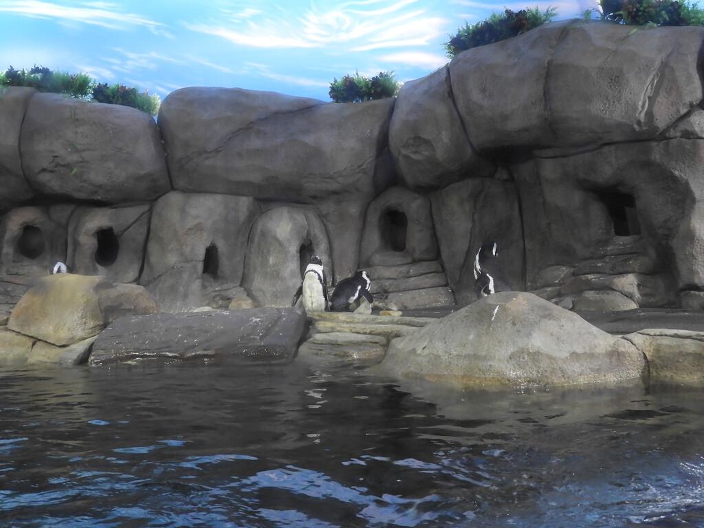 Perky Penguins by homeschoolmom