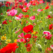 Wild Flowers by kwind