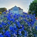 Brilliant Blue House by will_wooderson