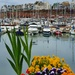 Harbouring Some Flowers