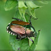 UGH Bug! by gardencat