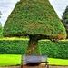 A Topiary Giant Mushroom. by teresahodgkinson