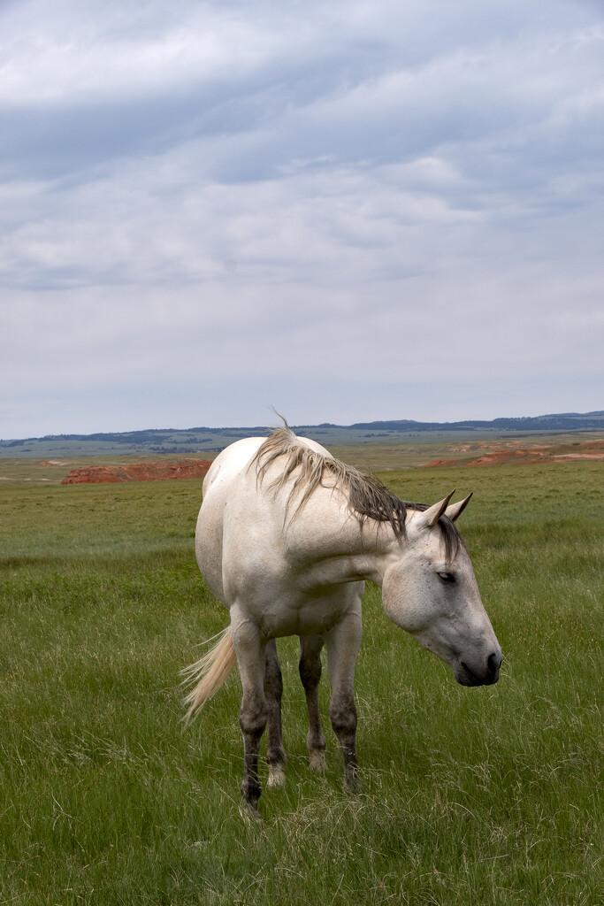 White Horse by mrslaloggie