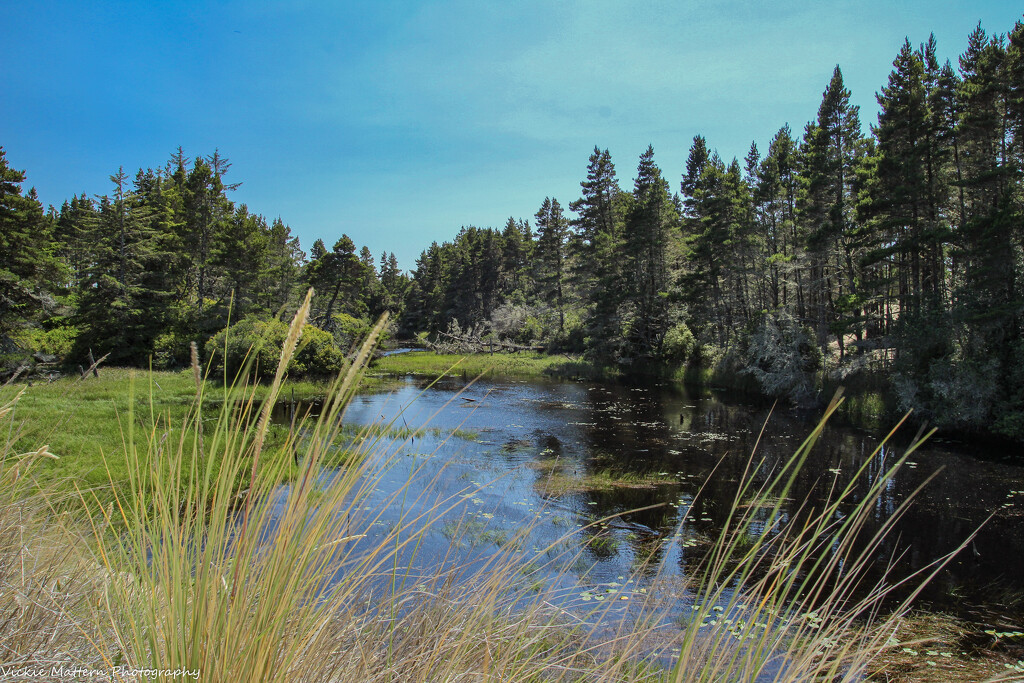Pretty Pond by vickiem